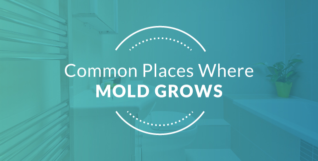 Common places for mold growth