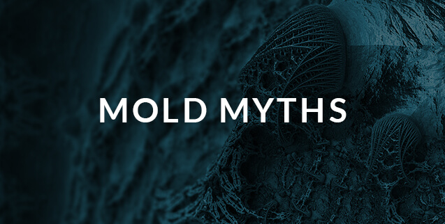 Mold myths