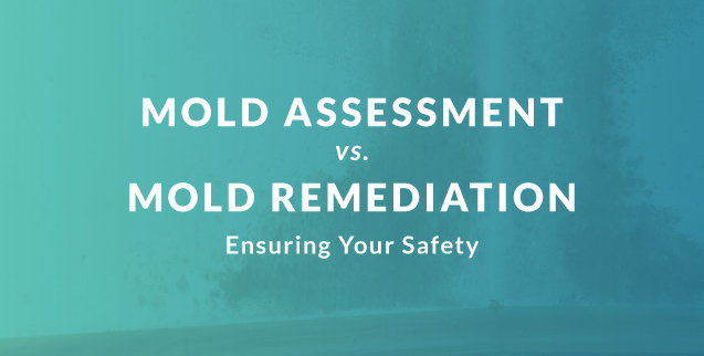 Mold Assessment and Mold Remediation