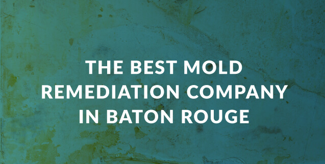 The Best Mold Remediation Company in Baton Rouge