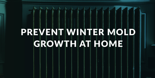 Prevent Winter Mold Growth at Home