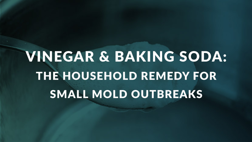 Vinegar & Baking Soda: The household remedy for small mold outbreaks.
