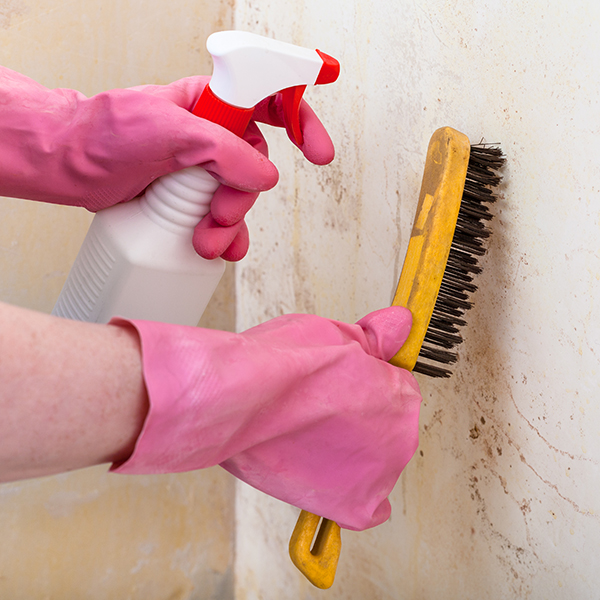 Person using black mold remediation cleaning services