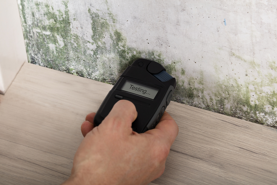 Person measuring the amount of black mold