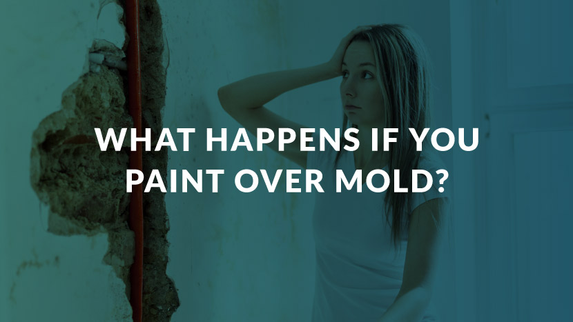What Happens If You Paint Over Mold?