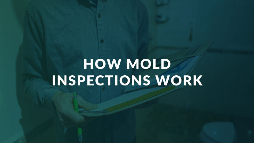 How Mold Inspections Works