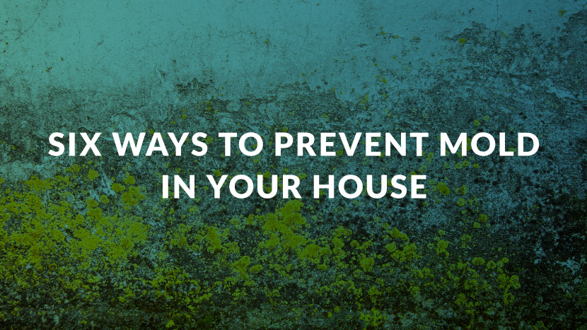 Six Ways to Prevent Mold in Your House